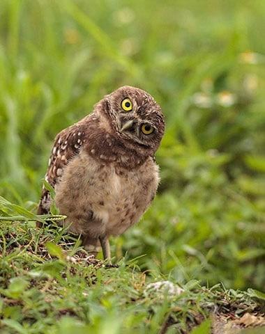 neugierig schauender Vogel